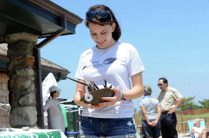 Jessie Vissicchio, 16, holds a crab to let it go into the water during the Greenwich Shellfish Commission's Experience the Sound event, at Greenwich Point, in Old Greenwich, Conn., Sunday, June 23, 2013.
