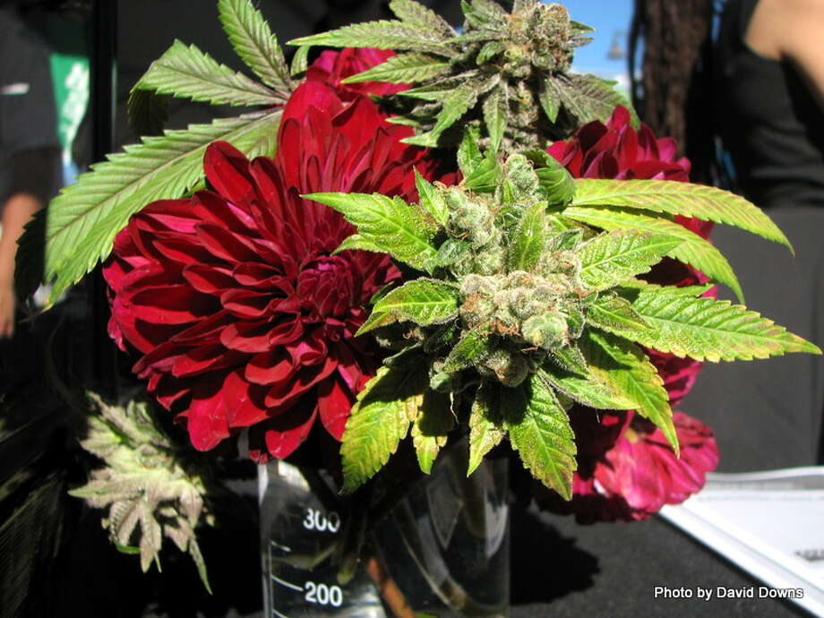 Medical cannabis is legal in California with a doctor's recommendation Photo: Picasa