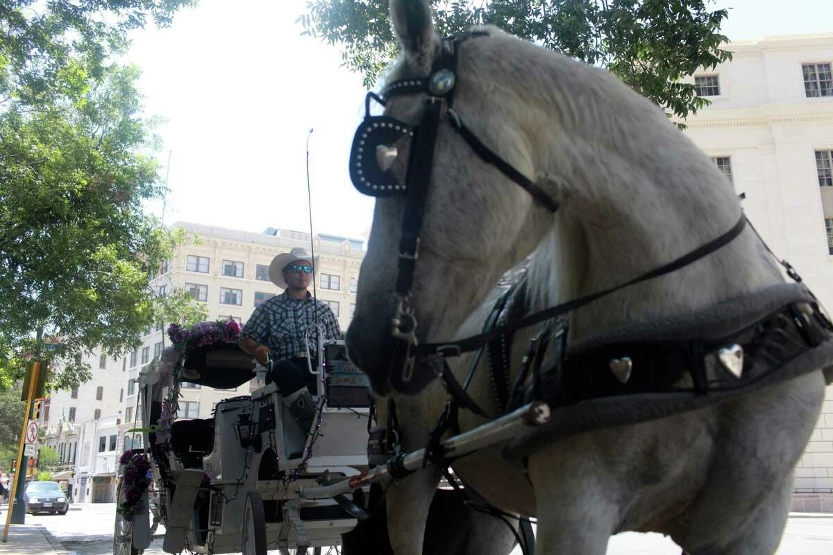 Ever wonder about those horse-drawn carriages seen on downtown streets? Click through the gallery to learn more about the 2,000-pound horses that pull them.