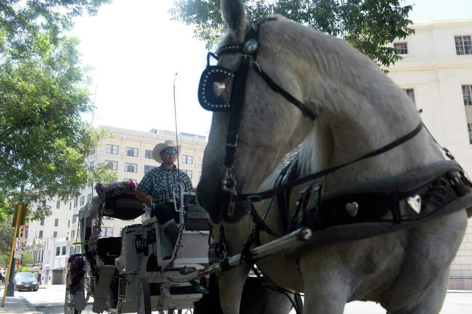 Ever wonder about those horse-drawn carriages seen on downtown streets? Click through the gallery to learn more about the 2,000-pound horses that pull them. Photo: Abbey Oldham, San Antonio Express-News / © San Antonio Express-News