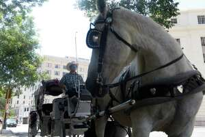 Jonathan Smith, 23 of San Antonio, sits in his carriage with his horse, Susie, in downtown San Antonio on Monday, June 17, 2013. E-N readers speak out against proposed City Council regulations to have San Antonio carriage horses work harder and longer.