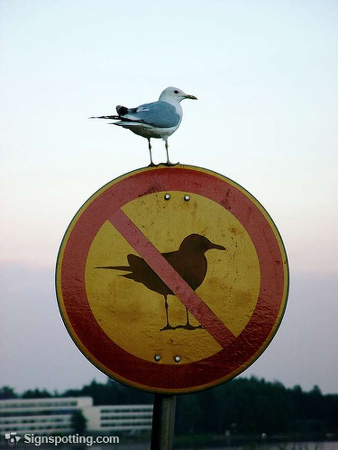 He flies in the face of authority. South Africa.