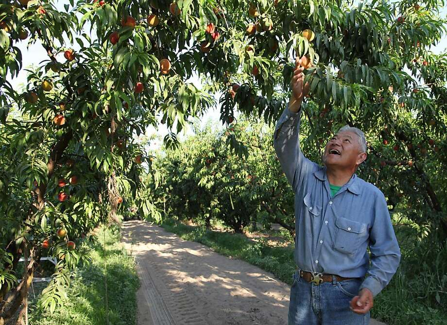 Peach farmer David Mas Masumoto and his family engage with customers by recently publishing a cookbook. Photo: Gosia Wozniacka, Associated Press