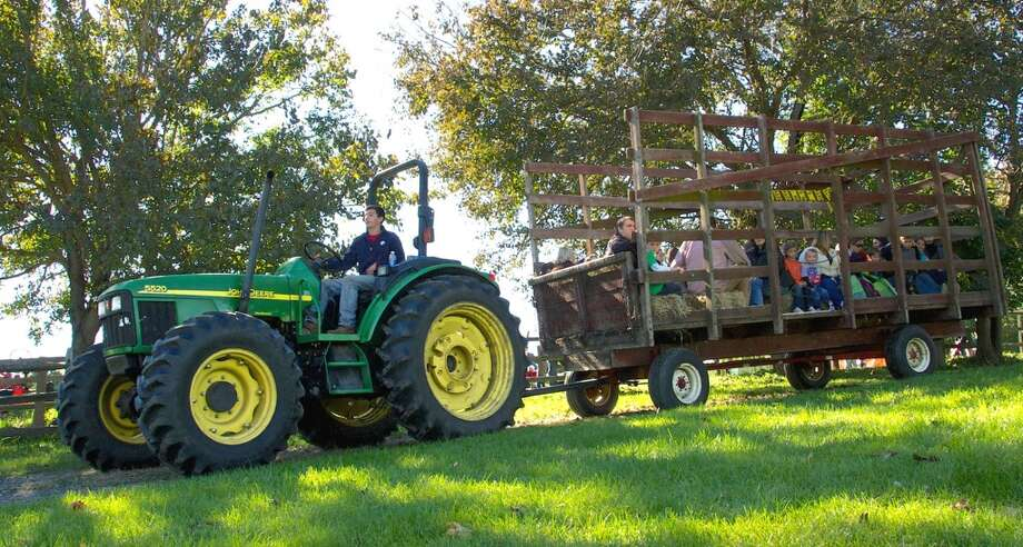 Hayrides at Sullivan Farm's fall festival in New Milford.