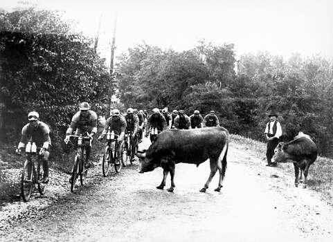 1929:  Cyclists pass a herd of cows. Photo: Keystone-France, Gamma-Keystone Via Getty Images / Gamma-Keystone