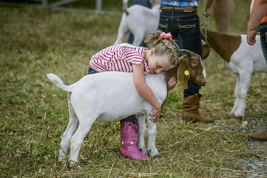 I'll let you eat the blue ribbon if you win:Five-year-old Miley Francis gives Cupcake a 