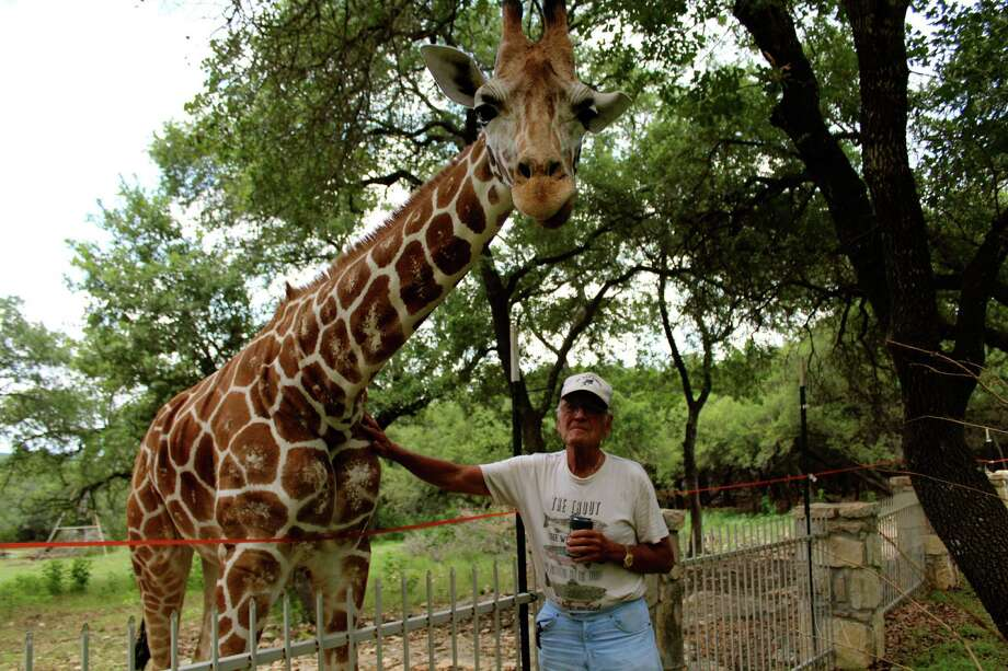 "Real estate developer G.G. Gale counts Zahara the giraffe and Coco parrot as his ""pets"" - among several exotic animals - on his far North Bexar County property. Photo: Photos By Yvonne Zamora / North Central News"