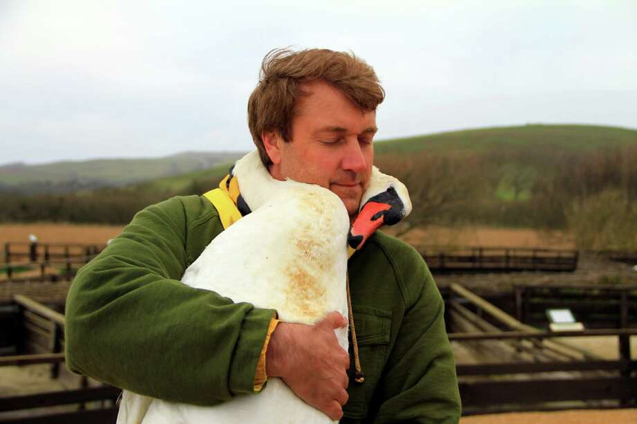 "Richard Wiese travels to Windsor, England to participate in a swan rescue for an episode of the Westport-produced travel program, ""Born To Explore."" The program, which airs Saturdays on ABC, recently took home an Emmy Award for Outstanding Achievement in Single Camera Photography. Photo: Contributed Photo"