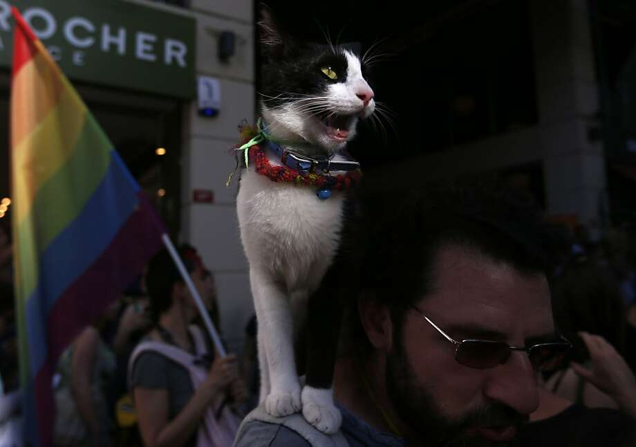 Along for the ride: A cat perches on the shoulder of a man attending a gay rights demonstration near Taksim Square in Istanbul. Photo: Petr David Josek, Associated Press