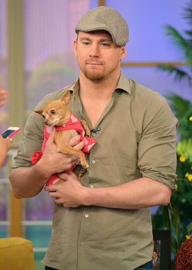 "MIAMI, FL - JUNE 24:  Channing Tatum appears on Univision's ""Despierta America"" to promote film ""White House Down"" at Univision Headquarters on June 24, 2013 in Miami, Florida.  (Photo by Gustavo Caballero/Getty Images)"