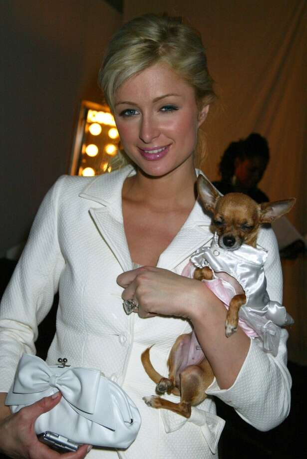 Chihuahuas seemed to be everywhere in the 2000s, including in the arms of Paris Hilton (with her dog Tinkerbell).