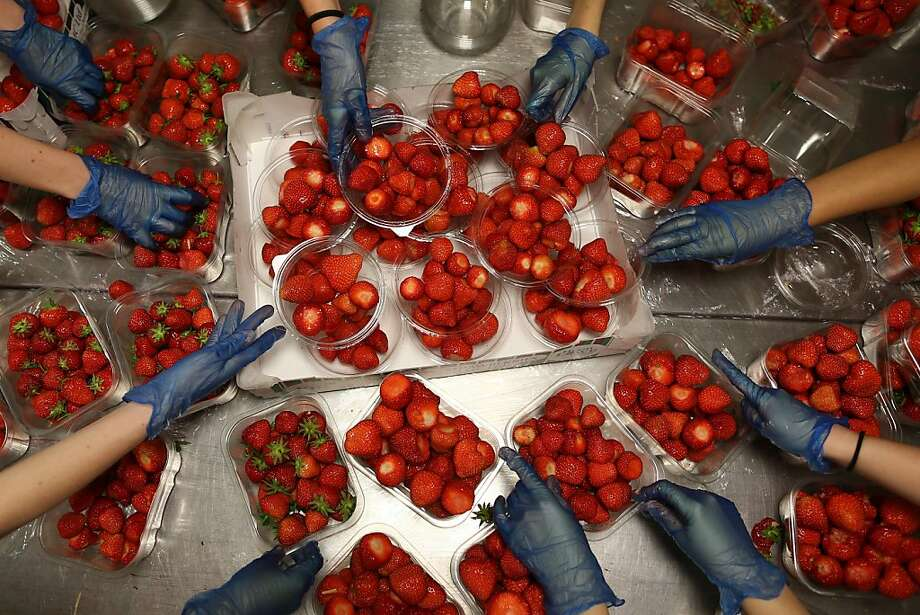 It wouldn't be Wimbledon without strawberries: Kitchen workers prepare the fruit at the All England 