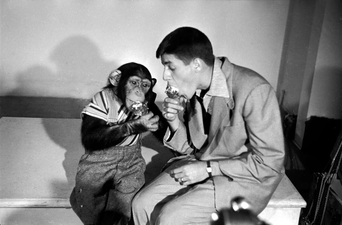 Jerry Lewis and a chimpanzee enjoy ice cream.