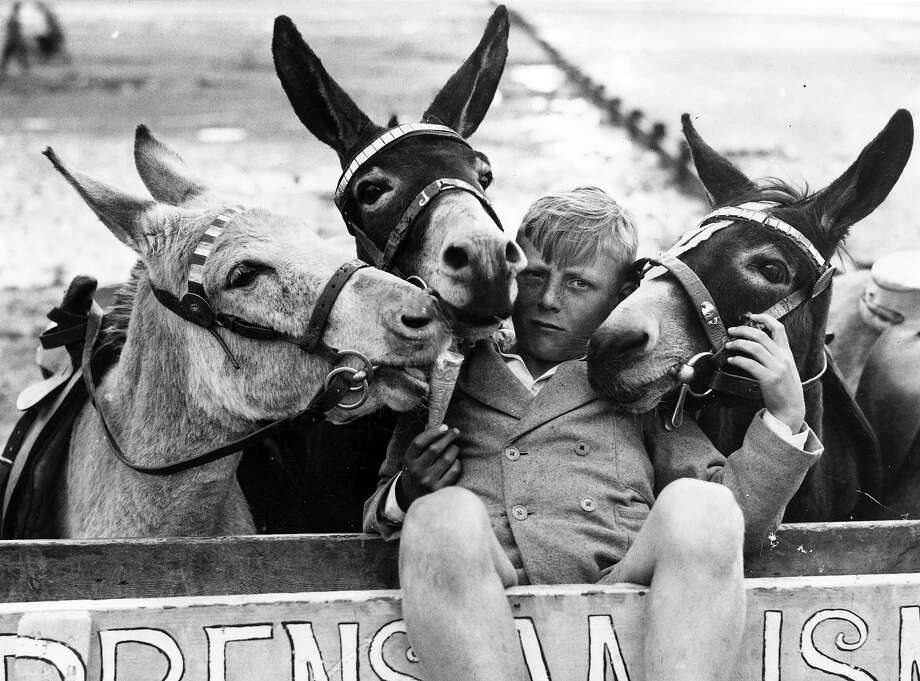 These donkeys just jacked this kid for ice cream. Photo: George W. Hales, Getty Images / Hulton Archive