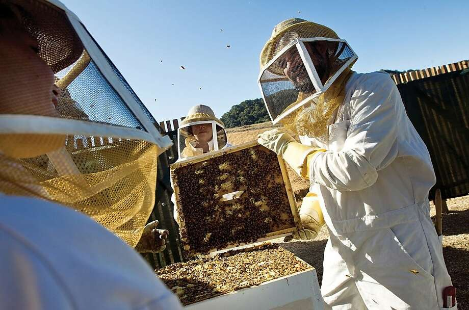 Standing close to the hives of some 150,000 bees at Carmel Valley Ranch  is a highlight of the ranch's bee experience tours led by apiarist John Russo of Carmel Lavender, but participants first learn a lot about the life of the busy insects and their history at the resort. Photo: Carmel Valley Ranch