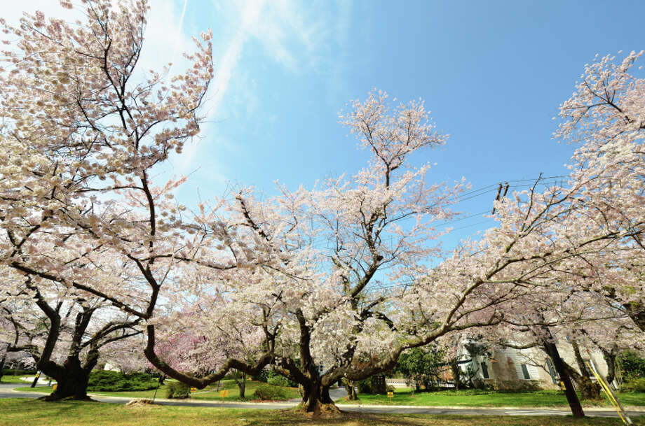 No. 1: Bethesda, Maryland With 27.3 percent of the population holding a professional or doctoral degree, Bethesda was named the nation's 'most educated place' by Nerd Wallet earlier this week.  Large cherry tree in blossom Photo: Kohei Ueda, Getty Images/Flickr Open / Flickr Open