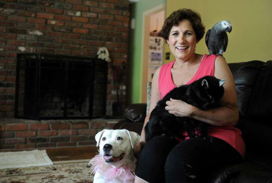 Gwen Gangi, at home in Monroe with her pets, from left, Blossom, Princess and Charlie, runs Fur to Feathers Pet Sitting Service LLC established in response to the ever-growing need for professional pet sitting services in northern Fairfield County. Photo: Autumn Driscoll / Connecticut Post