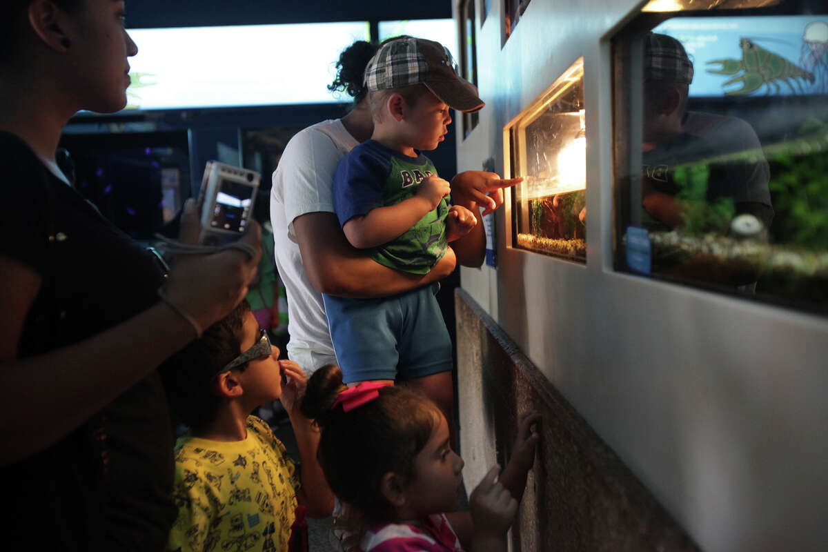 Visitors flocked to the turtle exhibit to see Thelma and Louise, the two-headed turtle, on display at the San Antonio Zoo on Thursday, June 27, 2013.