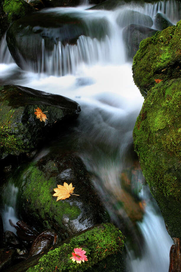 Water cascades down a rock near Lake Quinault in Olympic National Park. Photo: JOSHUA TRUJILLO, SEATTLEPI.COM