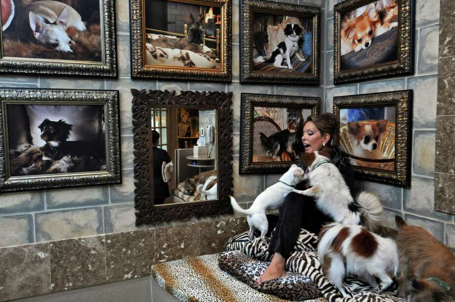 Michele Riggi visits with some of her dogs in their room in her home on Tuesday Jan. 31, 2012, in Saratoga Springs, N.Y.  (Philip Kamrass / Times Union ) Photo: Philip Kamrass / 00016257A