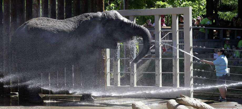 Elephants at Utah's Hogle Zoo are cooled off with water Friday in Salt Lake City during one of the worst heat waves in years. Photo: Rick Bowmer / Associated Press