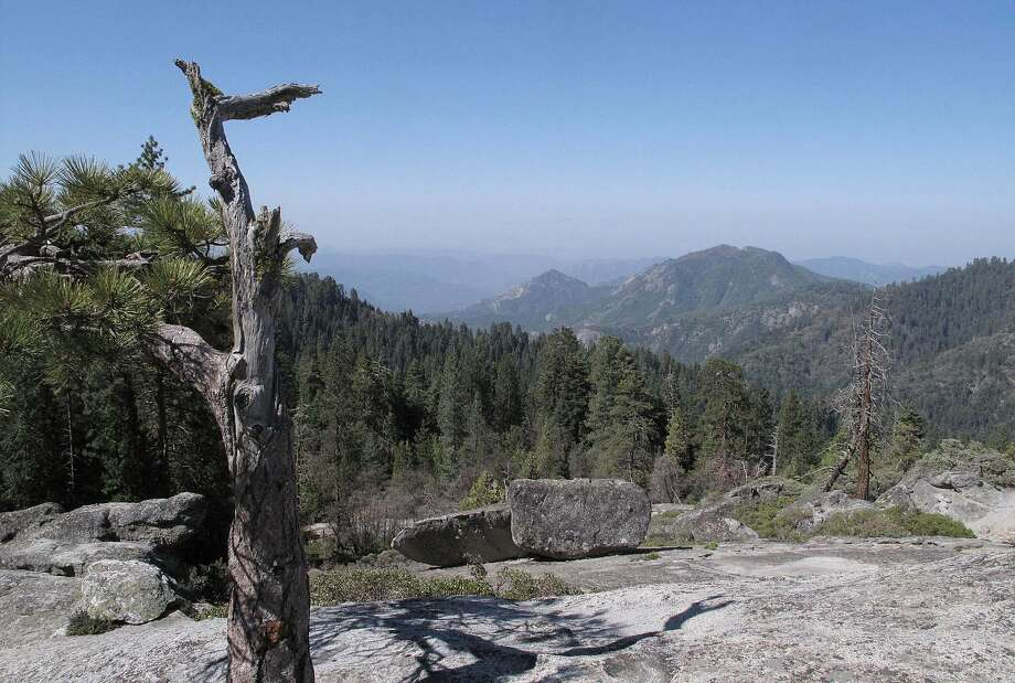 This view from Beetle Rock in Sequoia National Park shows that trees surrounding the marshy meadow is sucking the marshes dry. Glaciers are melting into mere ice fields. Wildflowers are blooming earlier. Photo: Tracie Cone, Associated Press