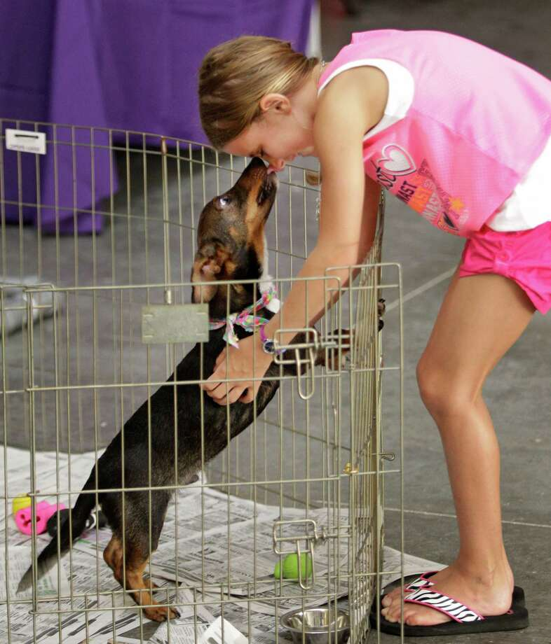 Kathryn Shulse, 9, gets kisses as she pets a dog during BARC's second Annual Bow Wow Meow Luau adoption event at CityCentre, 822 Town & Country Blvd., Saturday, June 29, 2013, in Houston.  More than 80 puppies, dogs, cats and kittens were available for adoption. Photo: Melissa Phillip, Houston Chronicle / © 2013  Houston Chronicle