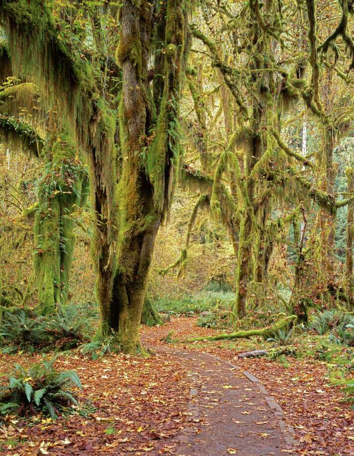 Hoh rainforest Photo: Danita Delimont, Getty Images/Gallo Images / Gallo Images