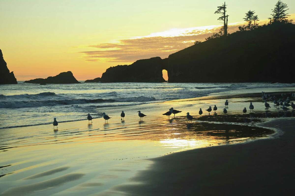 Seagulls on Second Beach at sunset near La Push, Olympic National Park, Washington, USA. Politicians of both parties will lead hikes this summer to protest the Trump administration's proposals for offshore oil and gas leasing.