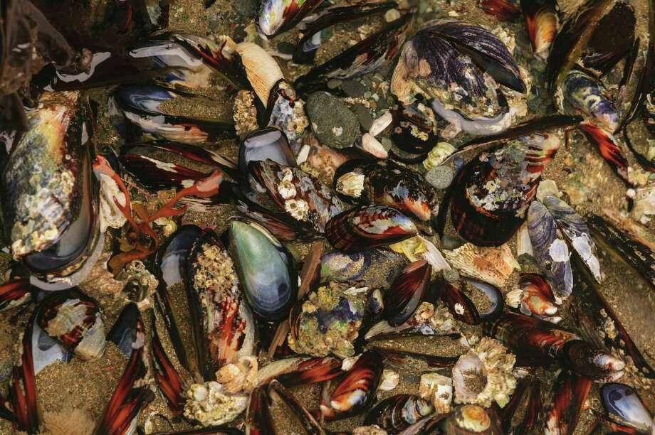 Mussel shells, Shi-Shi Beach Photo: Image Source, Getty Images/Image Source / (c) Image Source