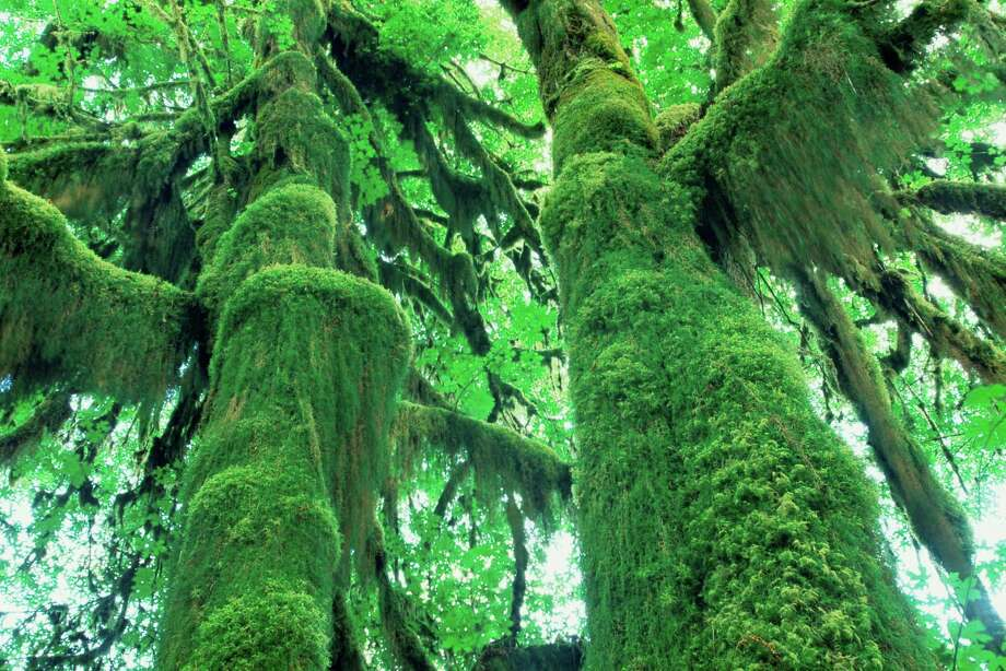 Hall of Mosses Photo: Frank Krahmer, Getty Images / (c) Frank Krahmer