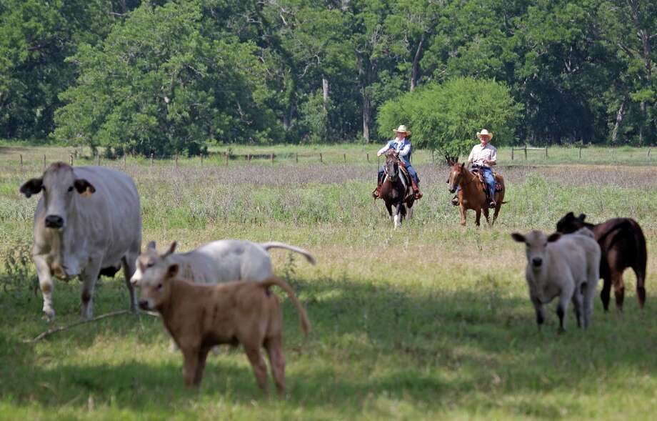Mary Chandler, left, on her horse, Zella, and her husband, Jim Chandler, on his horse, Cowboy, ride on the Half Circle O Ranch Friday, June 28, 2013, in Sealy.  Her family has been on the land since 1885. Farmers and ranchers in Austin and Waller counties are fighting a private company's plans to pump 20 million gallons of water a day from the aquifer beneath them and send it to the growing Fort Bend County suburbs. Opponents are worried about the availability of water, as well as subsidence. She is worried about losing her water and subsidence if the the permits are granted. Photo: Melissa Phillip, Houston Chronicle / © 2013  Houston Chronicle