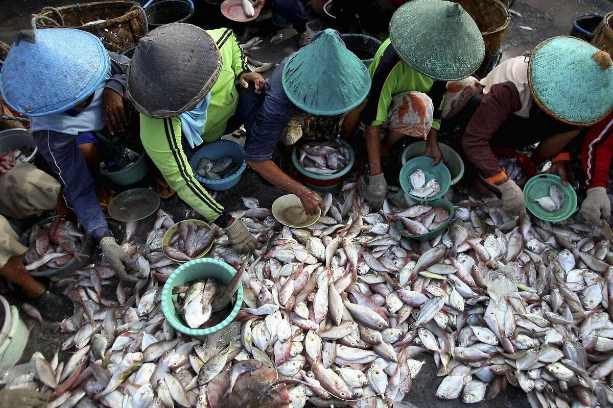 Fishermen sort fish at a fishing port in Brondong, East Java, Indonesia, Sunday, June 30, 2013. (AP Photo/Trisnadi)