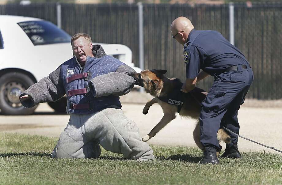 Chomped CHP: Either Lucky's bite is much worse than his bark, or California Highway Patrol K-9 training Officer Darren Long (left) is overacting the part of the pinched perp during a demonstration at CHP Academy in West Sacramento. Photo: Rich Pedroncelli, Associated Press