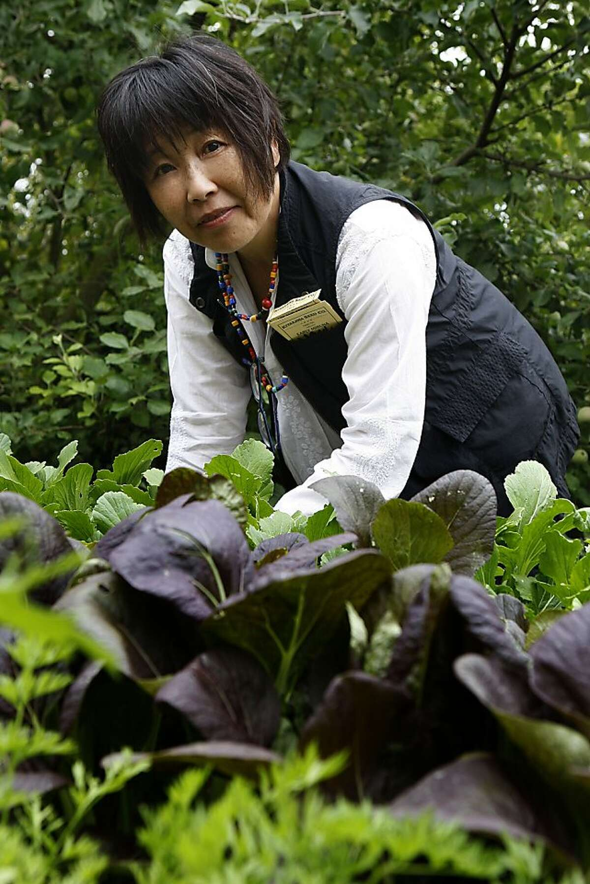 Owner of Kitazawa Seed Co. Maya Shiroyama shows her Pak choi trials from Japan in her test garden in Oakland, Calif., on Tuesday, June 4, 2013.