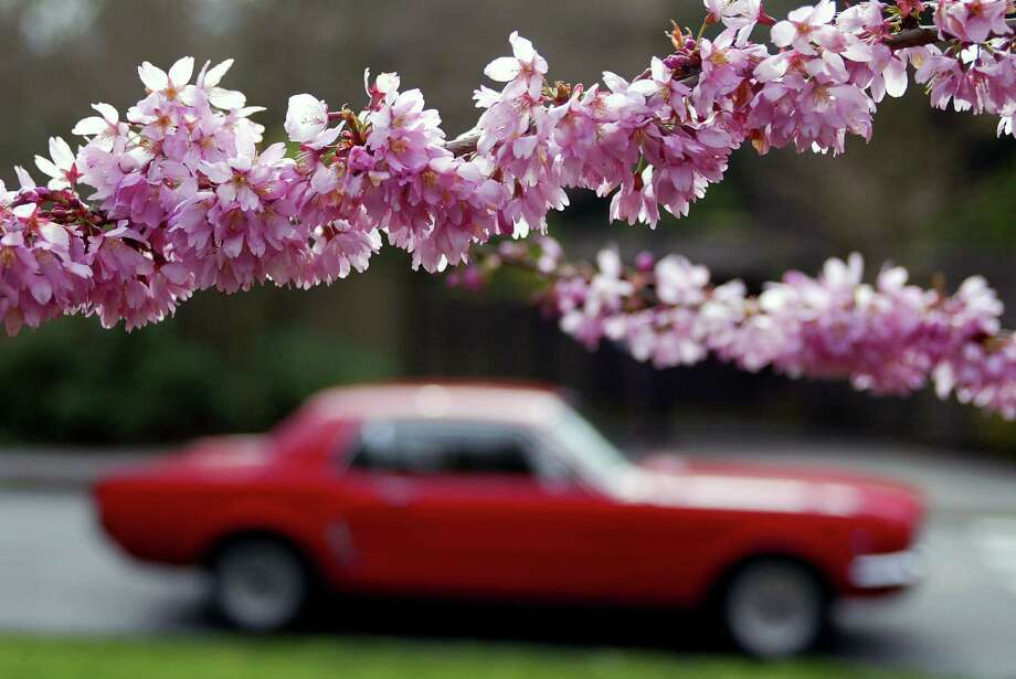 Get off of your feet and take a joyride with the top down. The Washington Arboretum offers many a visual delight, both on foot and behind the wheel. Photo: Mike Urban / SEATTLEPI.COM