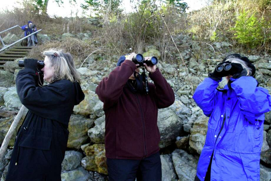 Want to to stick to the shade and relax? Birdwatching is free and fun, and can result in a fruitful search almost anywhere in Seattle. If you have your own suggestions on your favorite to-dos in Seattle on a hot day, feel free to leave a note in the comments below. (Photo by Jim Bryant; Seattle Post-Intelligencer file) Photo: SEATTLEPI.COM / SEATTLEPI.COM