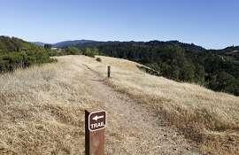Monte Bello Open Space Preserve, June 27, 2013, Los Gatos, Calif.