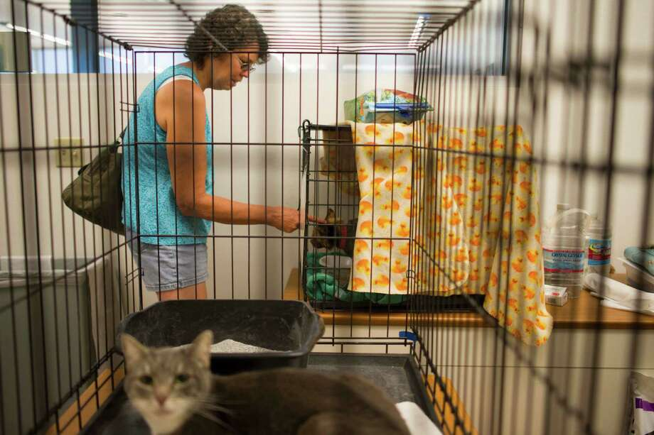 Mary Carruthers visits her cat, Freckles, at an animal shelter at Yavapai College in Prescott, Ariz., on Monday, July 1, 2013. Mary and her husband Ron believe their house survived the fire, but know that other family members' homes in Yarnell were destroyed.    (AP Photo/The Arizona Republic, Aaron Lavinsky)  MARICOPA COUNTY OUT; MAGS OUT; NO SALES Photo: Aaron Lavinsky, Associated Press / The Arizona Republic