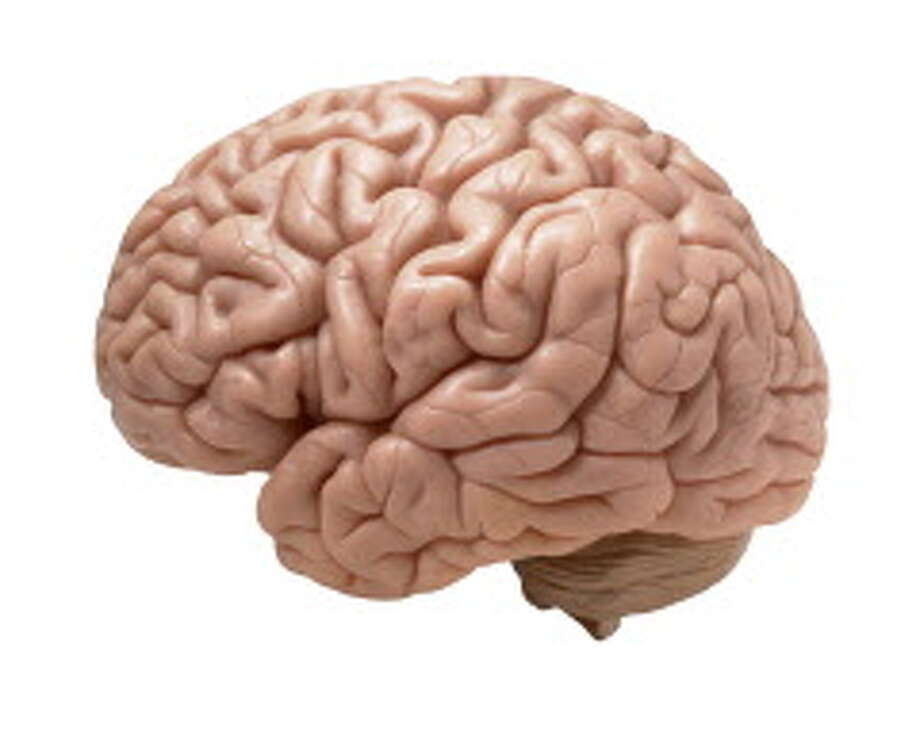 human brain on white background Photo: MARK SYKES / marksykes - Fotolia