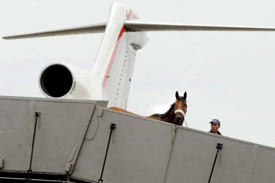 H.E. Sutton Forwarding Company Flight supervisor Ryan Starley leads a thoroughbred horse from the H.E. Sutton Boeing 727-200 equine transportation aircraft  Tuesday, July 2, 2013, at Albany International Airport in Colonie, N.Y. Horses trained by Randy Morse, Wayne Catalano, Neil Drysdale and Todd Peltcher were among those to make the trip to Saratoga Race Course.  (Cindy Schultz / Times Union) Photo: Cindy Schultz / 00023026A