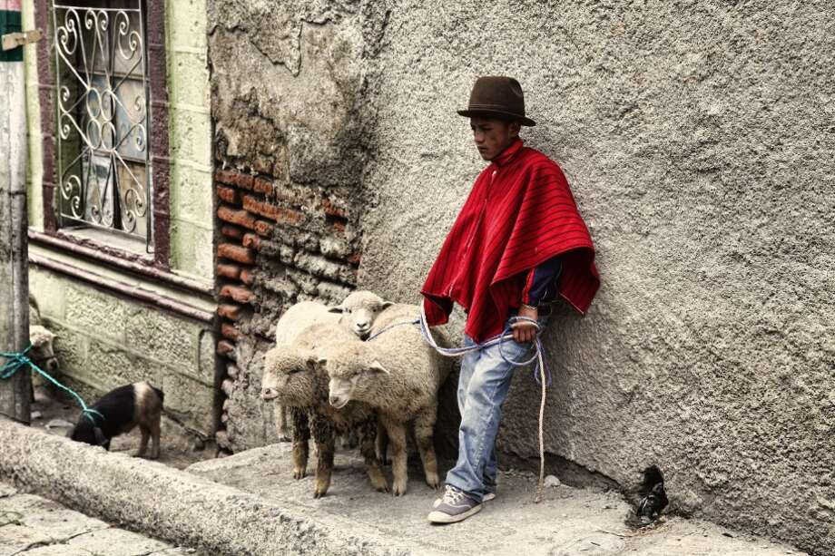 Looking for lambs? You'll find them at the indigenous market in Guamote, one of the stops for Tren Crucero.