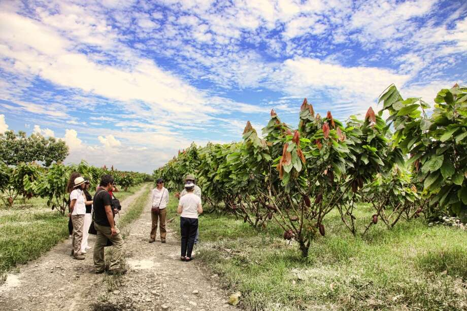 Visiting a typical coast plantation --  where bananas, sugarcane and rice may be grown -- is also part of the Tren Crucero itinerary.