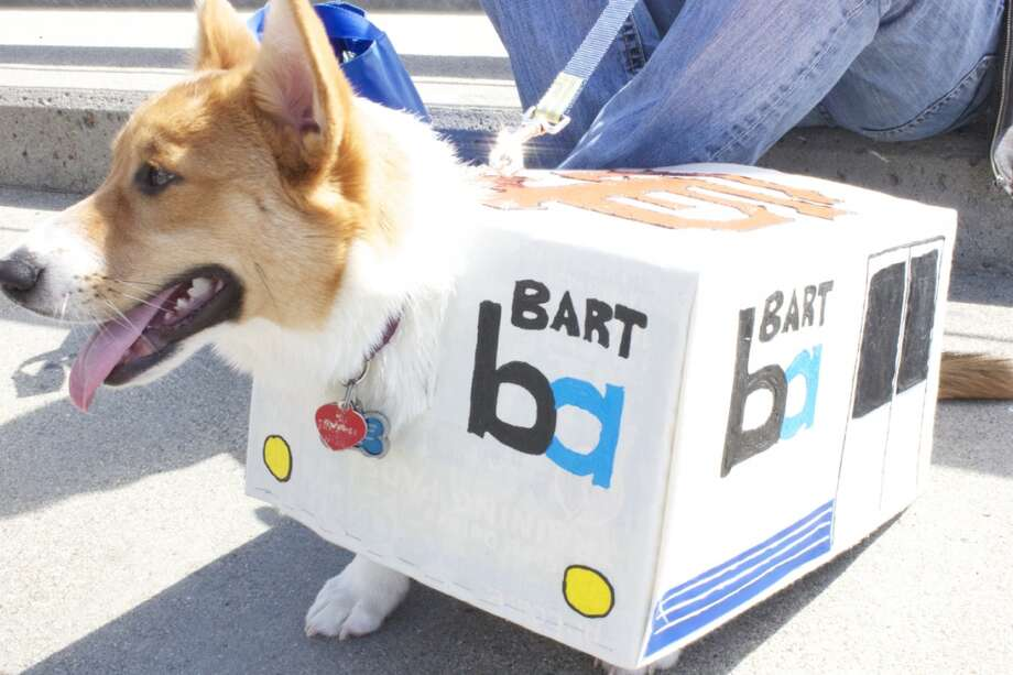 I was leaving the Chronicle at 2:30 p.m. to beat traffic yesterday, when Ellen Huet notified me that she had a lead on a Corgi dressed as a BART train. It was actually a friend of Katie Dowd's ...