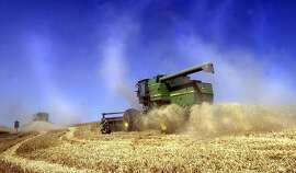 FILE--Two combines harvest grain in the Palouse region Aug.10, 2001, near Pullman, Wash. The future of Pacific Northwest wheat farmers may depend on whether Japan will accept genetically-modified wheat but so far Asian consumers are reluctant, scientists and industry experts said Monday, Dec. 3, 2001. (AP Photo/The Spokesman-Review, Christopher Anderson, File)