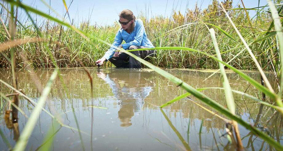Anna Armitage, a marine biologist with the Texas A&M University at Galveston, studies how underwater vegetation is affected when estuaries become too salty. Photo: Nick De La Torre, Staff / © 2013  Houston Chronicle
