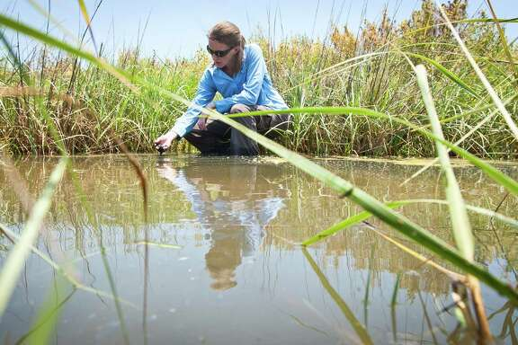 Anna Armitage, a marine biologist with the Texas A&M University at Galveston, studies how underwater vegetation is affected when estuaries become too salty.