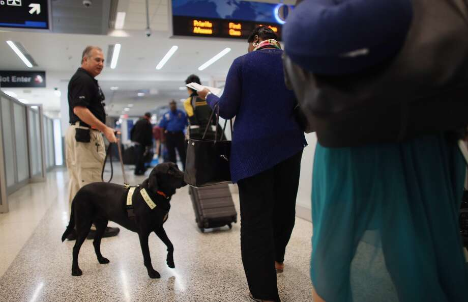 MIAMI, FL - MAY 03: TSA k9 Inspector Shawn Hurley works with Lewie to screen passengers at Miami International Airport on May 3, 2013 in Miami, Florida. The program already in place at three other airports in the nation uses behavior Detection Officers working together with the k9s to do real time threat assessments and direct additional passengers to the TSA expedited screening lanes. (Photo by Joe Raedle/Getty Images)