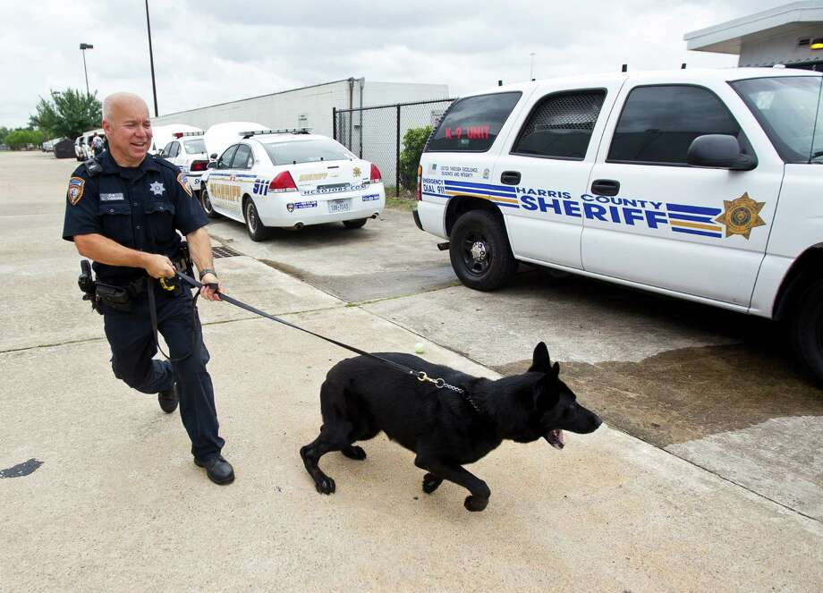 Harris County Sheriff Office deputy David Thomas is pulled by his German Shepherd Boomer as he walks to his vehicle after a training session, Wednesday, May 29, 2013, in Houston. ( Nick de la Torre / Chronicle ) Photo: Nick De La Torre, Staff / © 2013 Houston Chronicle