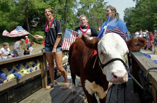 A Hereford steer named Buddy rides on the Kingwood High School Future Farmers of America float along with FFA members Shelby Warren, 16, left, Haley O'Brien, 15, center, and Buddy's owner, Angela Estrems, 16, right,  during the Kingwood Civic Club 4th of July Parade Thursday, July 4, 2013, in Kingwood. Photo: Melissa Phillip, Houston Chronicle / © 2013  Houston Chronicle